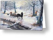 Quiet In The Woods Greeting Card