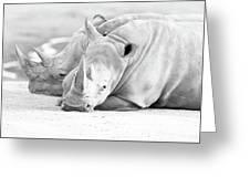 Rhino Quiet Moment Greeting Card