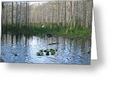 Quiet Moment In The Glades Greeting Card