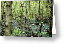 Quiet Stream Greeting Card