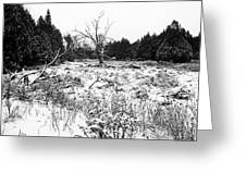 Quiet Winter Black And White Greeting Card