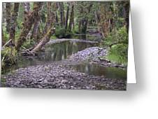 Quinault Rain Forest 3147 Greeting Card