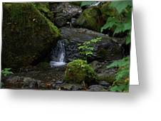 Quinault Washington Rain Forest Greeting Card