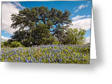 Quintessential Texas Hill Country County Road Bluebonnets And Oak - Llano Greeting Card