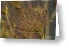 Quirky Red Squiggly Flower 4 Greeting Card