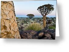 Quiver Tree Aloe Dichotoma, Quiver Tree Greeting Card