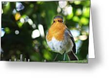 Quizzical Robin Greeting Card