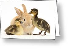 Rabbit And Ducklings Greeting Card