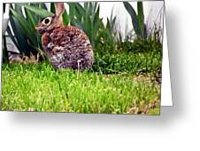Rabbit As A Painting Greeting Card