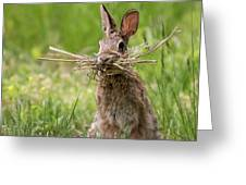 Rabbit Collector Square Greeting Card