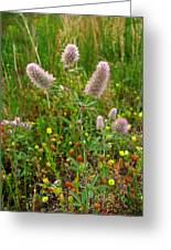 Rabbit Foot Clover Greeting Card