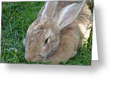 Rabbit Head On Greeting Card