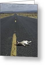 Rabbit Road Kill Greeting Card