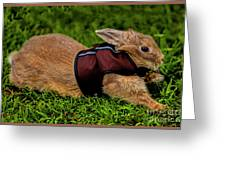 Rabbit With Vest Greeting Card