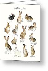 Rabbits And Hares Greeting Card