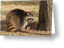 Raccoon #4 Greeting Card