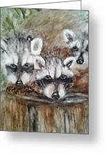 Raccoon Babies By Christine Lites Greeting Card by Allen Sheffield