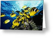 Raccoon Butterflyfish Greeting Card