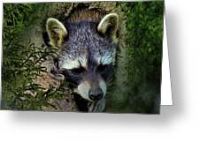 Raccoon In A Log Greeting Card