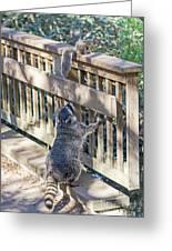 Raccoon Shenanigans Greeting Card