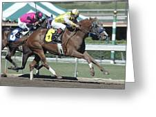 Race Horse Number 6 Greeting Card