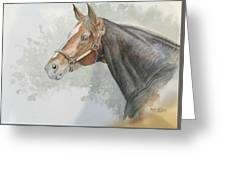 Race Horse Study 1 Greeting Card