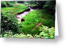 Rachel Carson National Wildlife Refuge Greeting Card by Thomas R Fletcher
