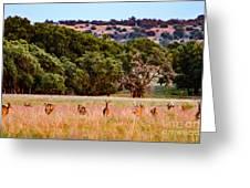 Nine Racing Whitetail Deer Greeting Card