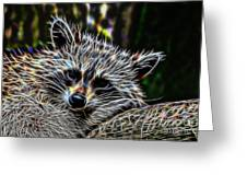 Racoon Fractal Greeting Card
