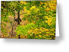 Racoon In Fall Trees Greeting Card