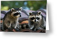 Racoons On The Roof Greeting Card
