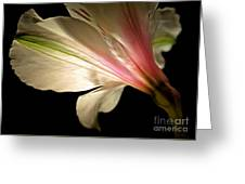 Radiance Of Hope Greeting Card