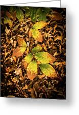 Radiant Beech Leaf Branches Greeting Card