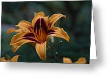 Radiant Lily Greeting Card
