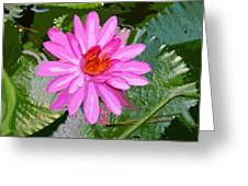 Radiant Pink Greeting Card