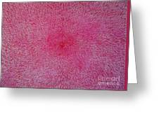 Radiation With Pink And Magenta  Greeting Card