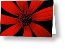 Radical Red Greeting Card