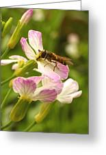 Radish Flower And The Fly Greeting Card by Steve Augustin