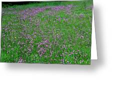 Ragged Robin IIi Greeting Card