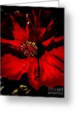 Raging Red Hibiscus Greeting Card