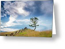 Rail Fence And A Tree Greeting Card