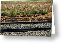 Rails And Roses Greeting Card