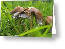 Rain Bombarding Mushroom Settlement. Greeting Card