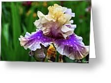 Rain Coated Multi Colored Iris Greeting Card