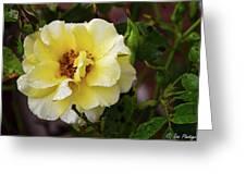 Rain Coated Yellow Rose Greeting Card
