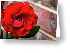 Rain Covered Red Rose Greeting Card