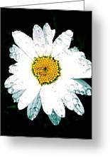 Rain Daisy  Greeting Card