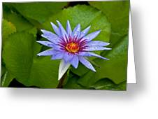 Rain Drenched Blue Lotus In Grand Cayman Greeting Card