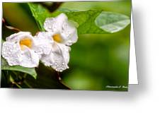 Rain Drenched Pair Greeting Card