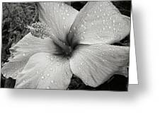 Rain-drenched Greeting Card